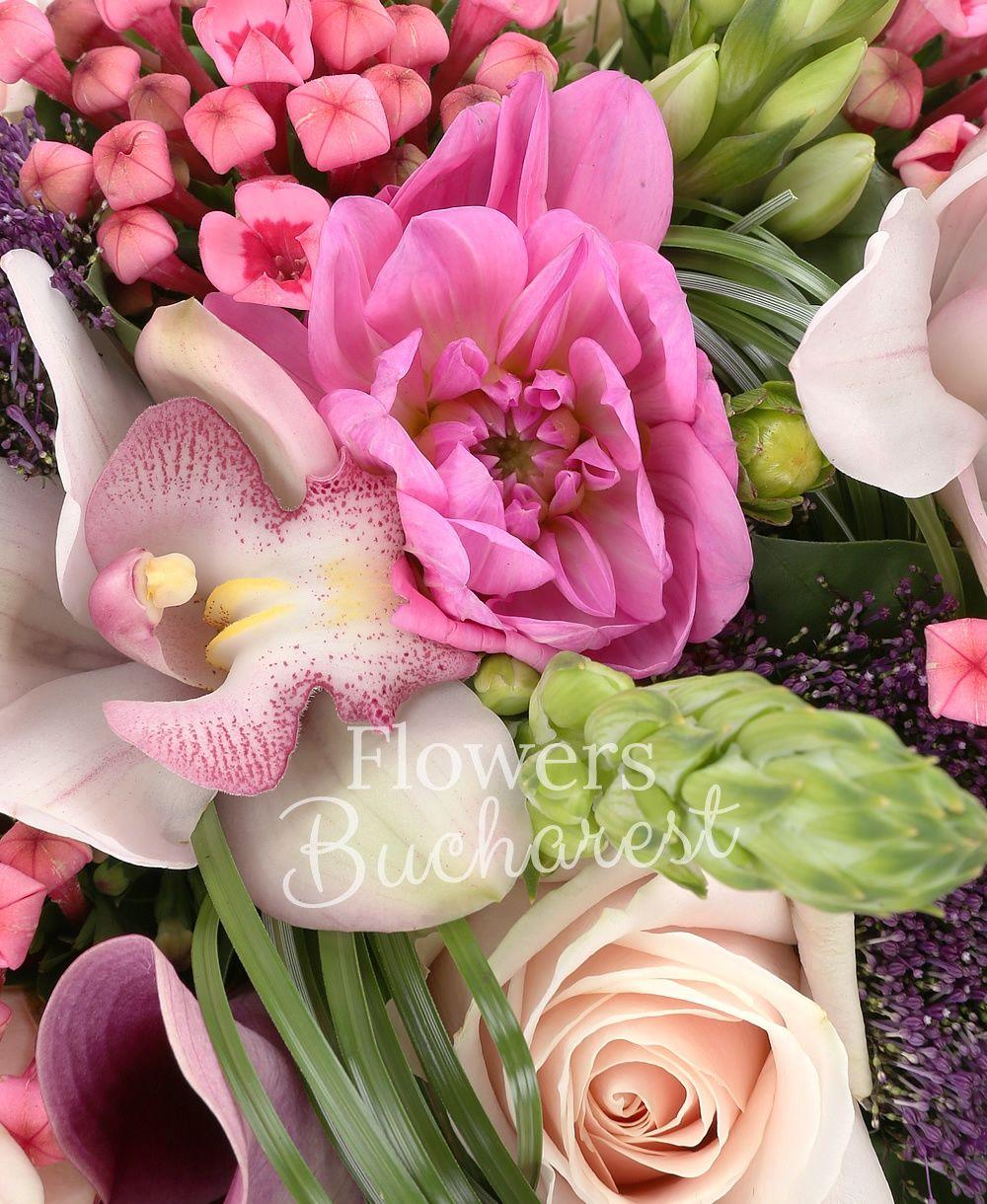 9 white ornithogalum, 7 pink dahlias 7 pink roses, 7 pink bouvardia, 7 pink cala, 7 mauve trachelium, white cymbidium, greenery