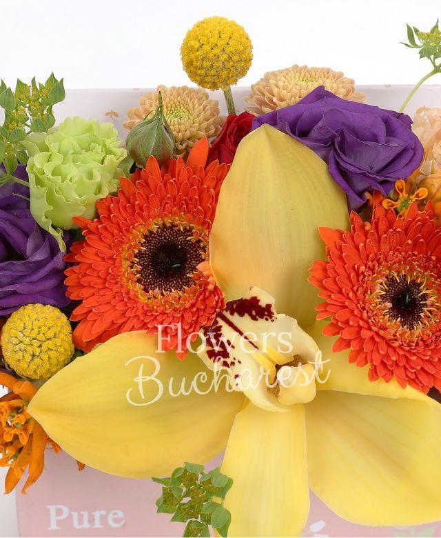 2 gerbera portocalie, 3 trandafiri rosii, 1 trandafiri galben, cymbidium galben, 2 lisianthus roz, 1 lisianthus verde, 2 lisianthus mov, 3 craspedia, 1 santini galben, asclepias, bupleurum ,cutie