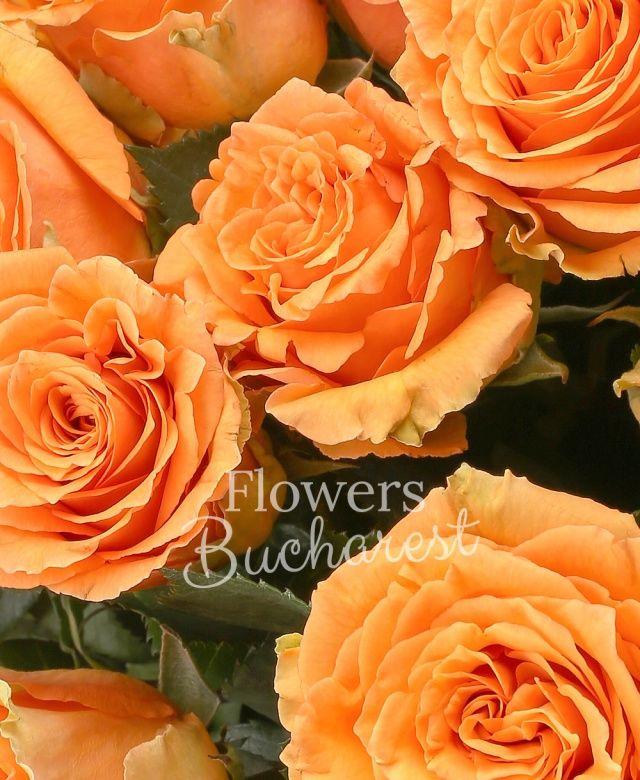 31 trandafiri portocalii, salal