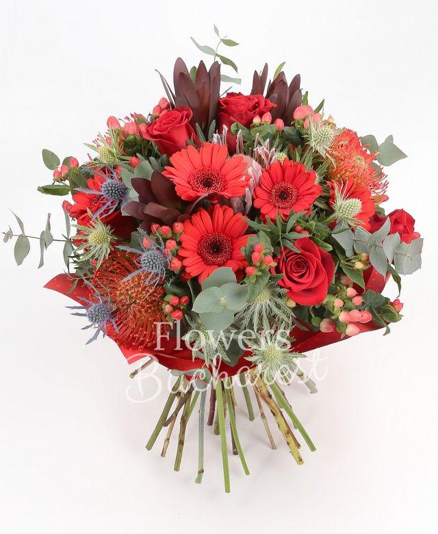 5 trandafiri rosii, 5 gerbera rosii, 3 leucospermum, 3 leucadendron, 3 eryngium, 5 hypericum roșu, eucalypt