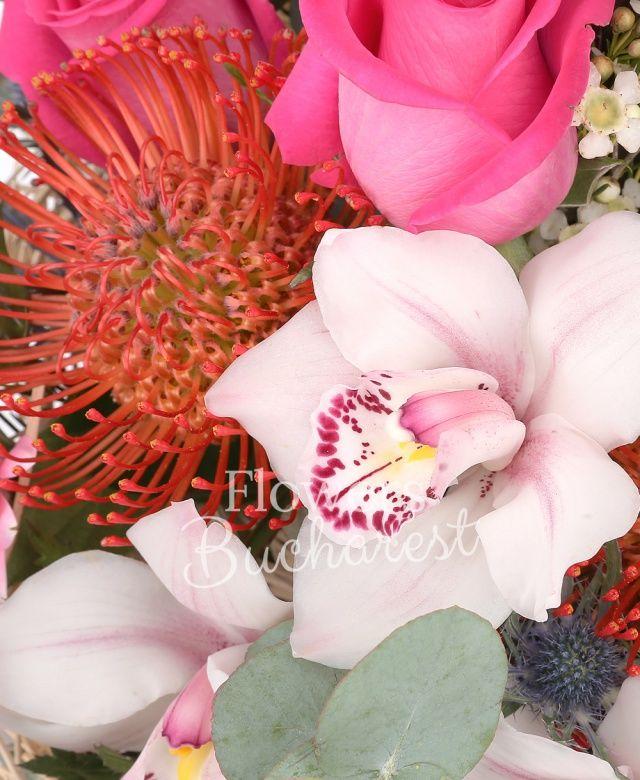 5 trandafiri cyclam, 2 leucadendron, 2 leucospermum, cymbidium alb, 2 gerbera roz, 2 eryngium, waxflower alb, eucalypt, cuib