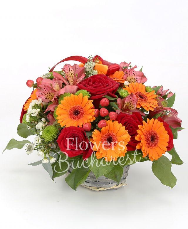 4 trandafiri rosii, 4 gerbera portocalie, 2 alstroemeria roz, 2 hypericum, 2 santini verde, astranția alba, waxflower alb, salal, coș