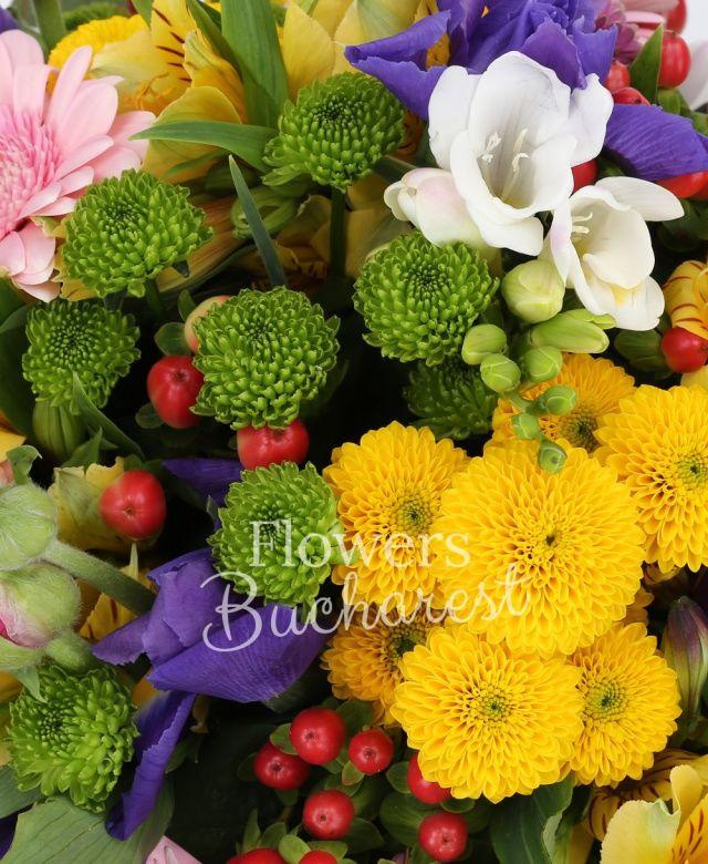 10 iris mov, 7 gerbera roz, 3 santini verde, 2 santini roz, 3 santini galben, 5 alstroemeria galbenă, 5 hypericum roșu, 5 frezii albe, eucalypt