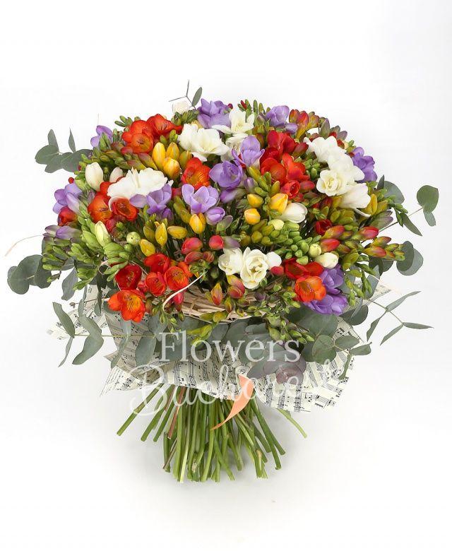 75 frezii multicolore, eucalypt, cuib