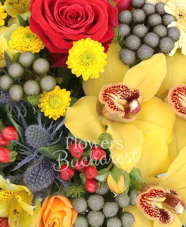 5 trandafiri rosii, 3 miniroze portocalii, 7 santini galben, 5 brunia, 3 alstroemeria galbenă, cymbidium galben, 5 garoafe crem, 2 eryngium, 5 hypericum roșu, 5 gerbera roșie, eucalypt, coș