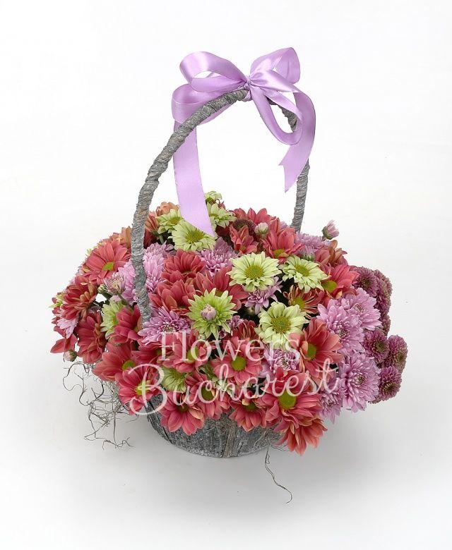 5 crizanteme roz, 5 crizanteme mov, 8 crizanteme crem, 3 crizanteme verzi, coș