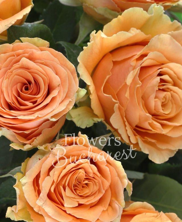 29 trandafiri portocalii, salal