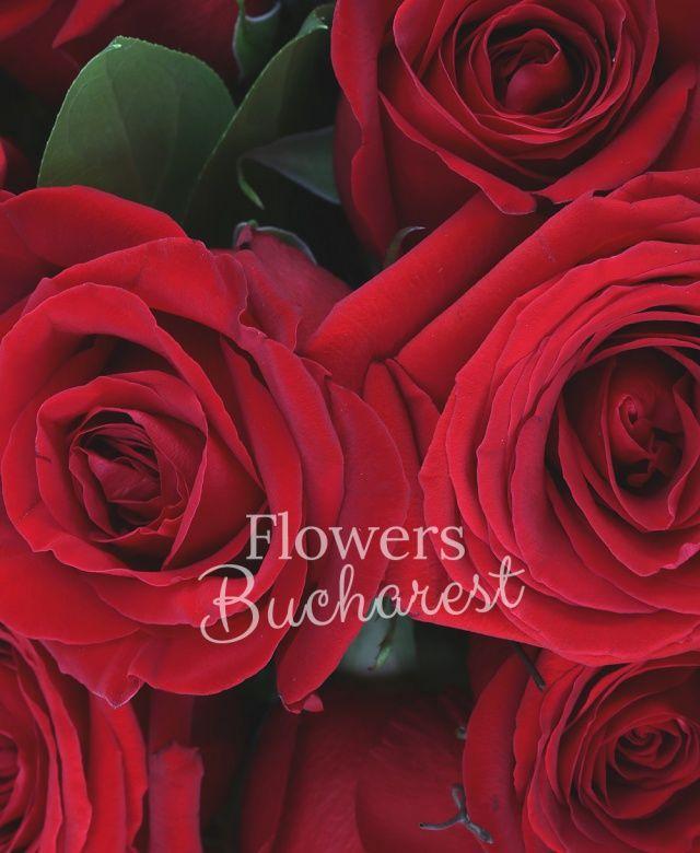 33 trandafiri rosii, salal