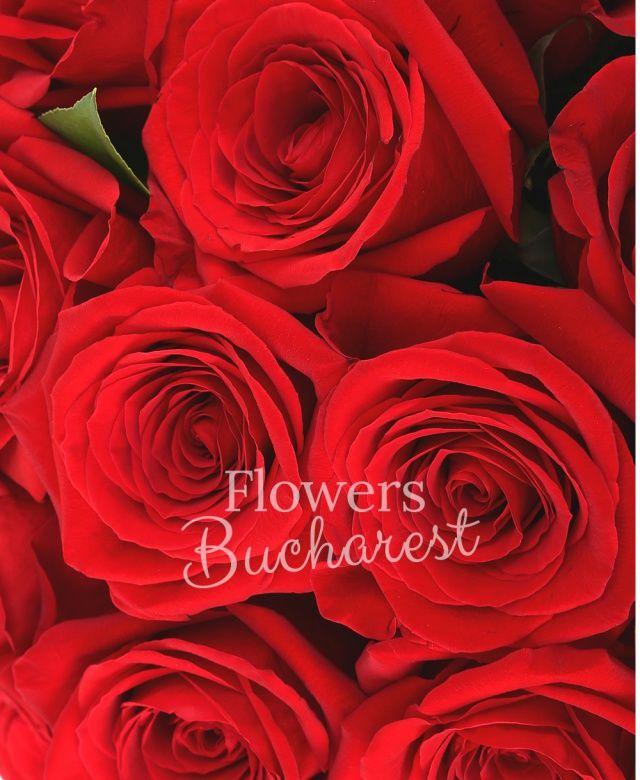 25 trandafiri rosii