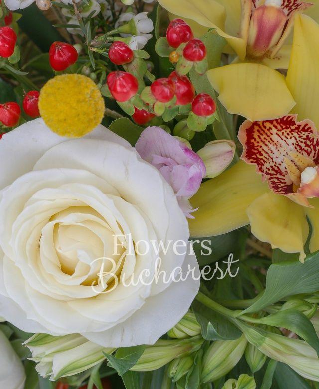 2 trandafiri albi, 2 alstroemeria alba, 4 lalele rosii, 2 hypericum roșu, 4 frezii albe, cymbidium galben, 2 craspedia galbene, waxflower, salal, cuib