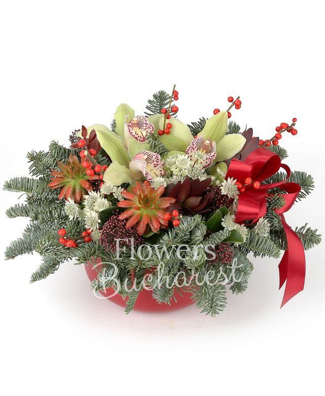 3 cupe orhidee cymbidium verde, 1 ilex, 2 echeveria rosii, 2 leucadendron roșu, 2 schimia, astranția alba, brad, eucalypt, vas ceramic