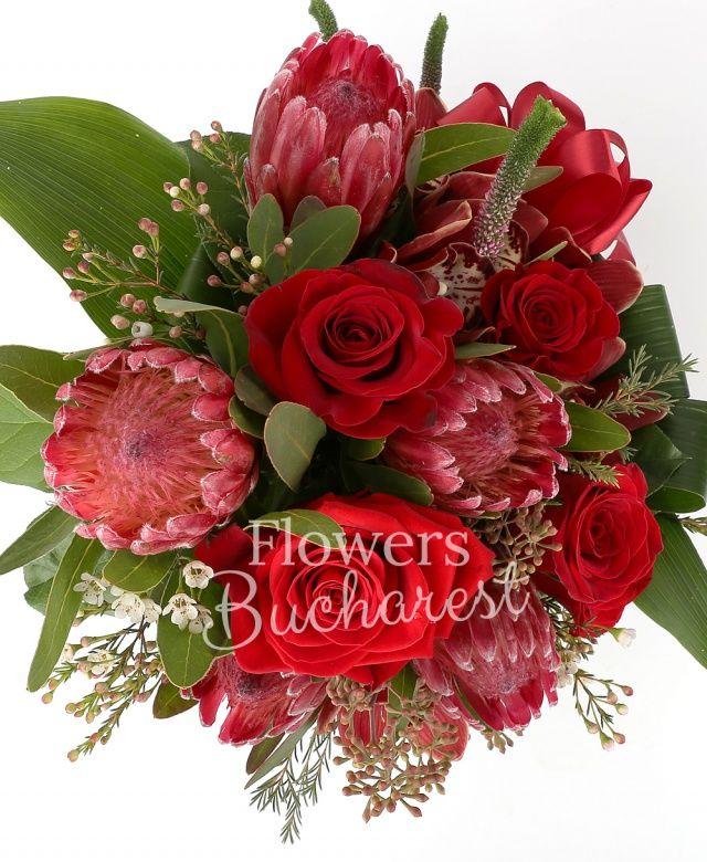5 trandafiri rosii, 5 proteea, cymbidium grena, 3 veronica roz, waxflower alb, eucalypt, aspidistra, salal, fundă, vas ceramic