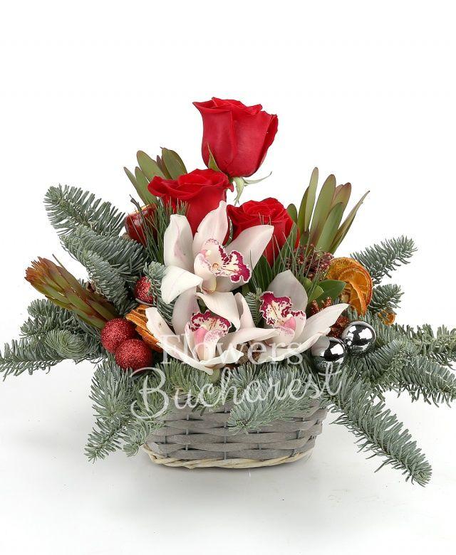3 trandafiri rosii, 3 leucadendron, cymbidium alb, schimia, pin, brad, globulețe, felii portocala uscate, coș