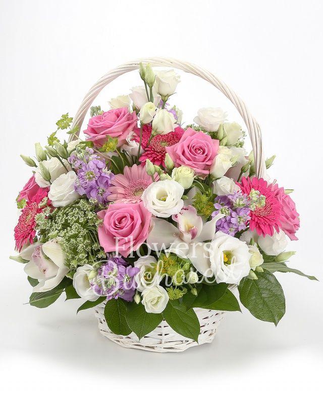 10 matthiola mov, 10 trandafiri roz, 5 gerbera, 3 ammi, 5 lisianthus, cymbidium alb, bupleurum, solidago, coș