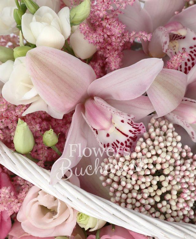 3 trandafiri crem, 2 lisianthus, 2 rice flower, 5 astilbe, 5 frezii albe, cymbidium, coș