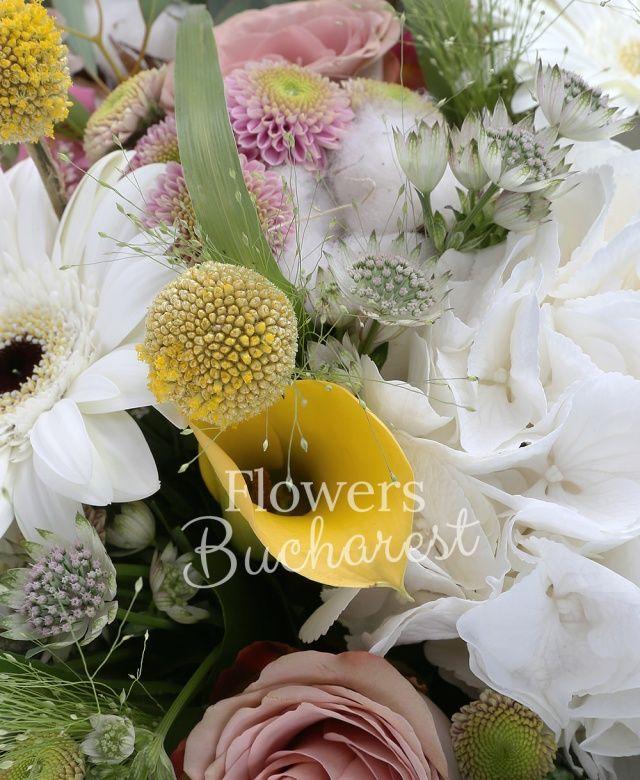 2 cale galbene, 2 hortensii, 2 gerbera albe, 4 astilbe roz, 4 antirrhinum, 4 santini roz, 4 trandafiri cappuccino, 7 astranția, bumbac, panicum, eucalypt, salal, aralia