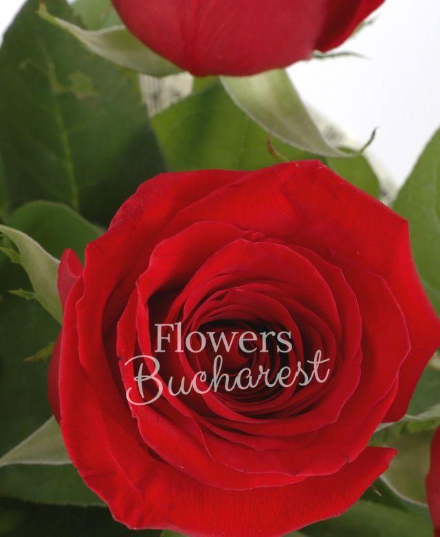 5 trandafiri rosii, salal