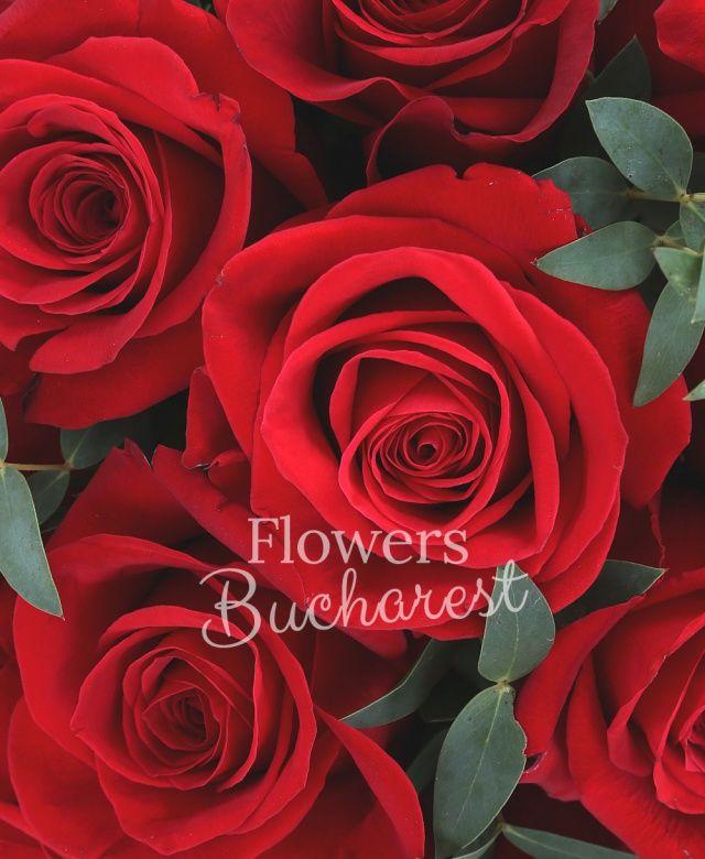 35 trandafiri rosii, eucalypt, cutie rotundă