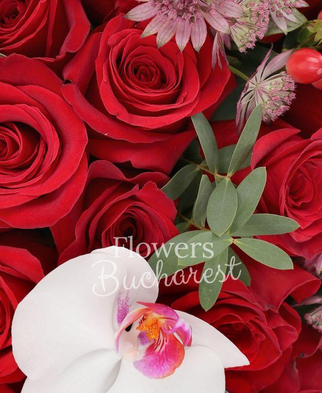 51 trandafiri rosii, astranția, 5 hypericum, phalaenopsis, eucalypt, cutie rotundă