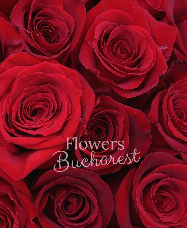 55 trandafiri rosii, cutie rotundă