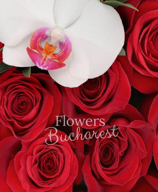 16 trandafiri rosii, phalaenopsis, tillandsia, cutie pătrată