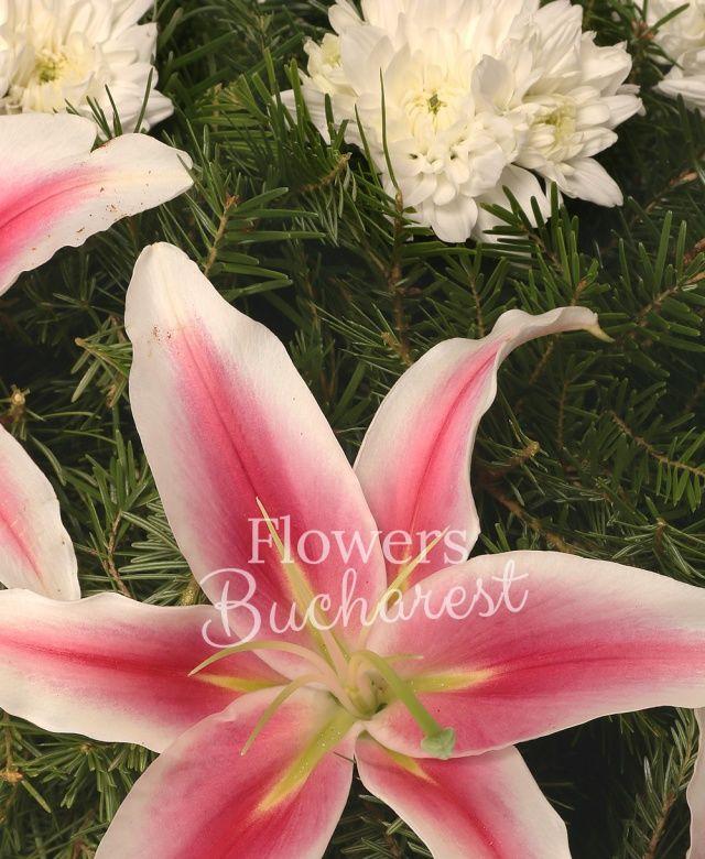 crizantemă alba, crini roz, brad