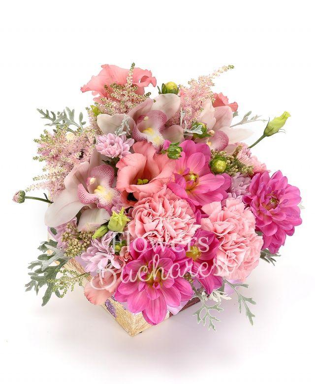 3 astilbe roz, 3 dalii roz, 3 garoafe roz, 2 lisianthus roz, 1 crizantemă roz, cymbidium alb, senecio, cutie