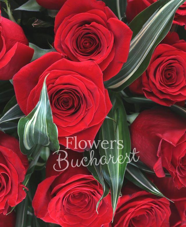 43 trandafiri rosii, dracaena