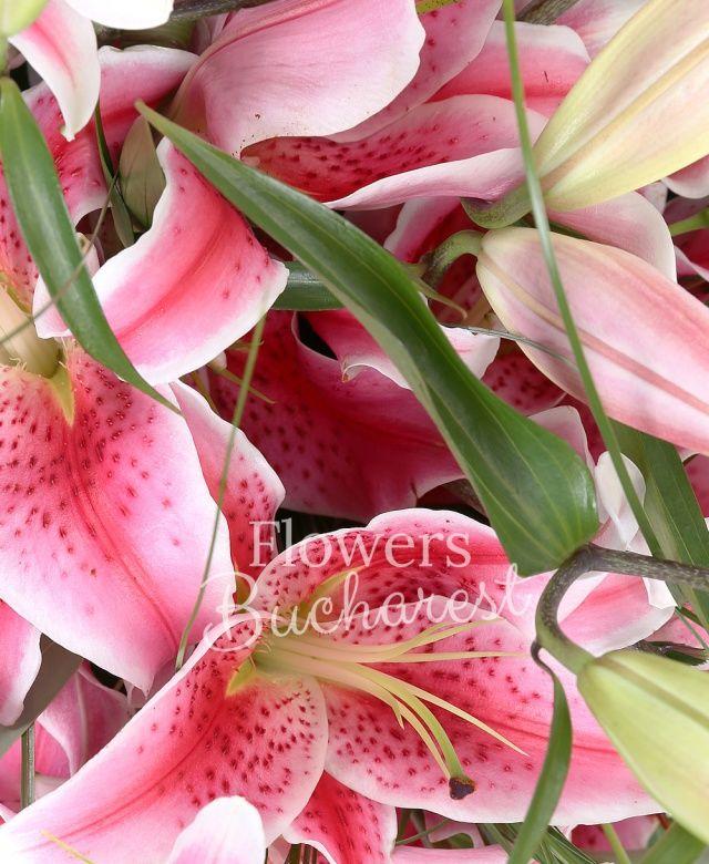 7 crini roz, beargrass