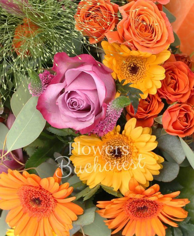 5 trandafiri mov, 5 miniroze mov, 5 veronica roz, 7 gerbera portocalie, 3 cymbidium roz, 2 hypericum roșu, 1 panicum, eucalypt, salal, cuib