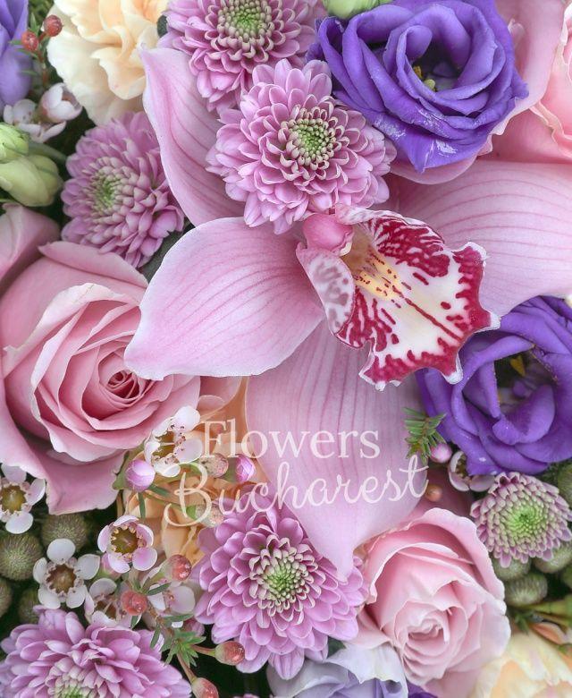 debut hampe florale cymbidi