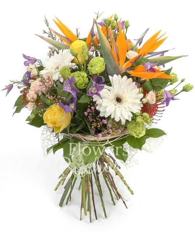 3 streliția, 5 clematis, 3 lisianthus verde, 3 miniroze crem, 2 gerbera alba, 2 leucospermum, 3 trandafiri galbeni, waxflower, salal, cuib