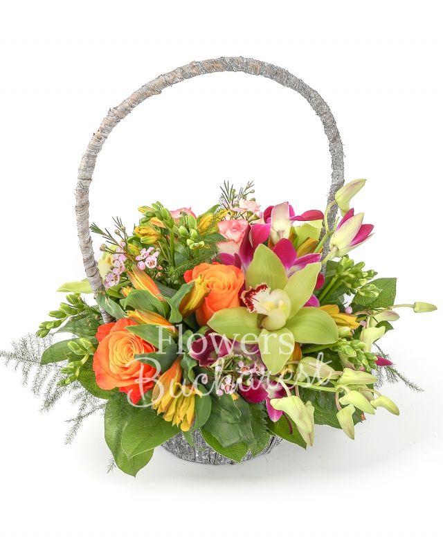 3 trandafiri portocalii, 2 trandafiri roz, 3 alstroemeria galbene, 3 orhidee dendrobium mov, 10 frezii albe, 2 waxflower roz, cymbidium verde, salal, coș
