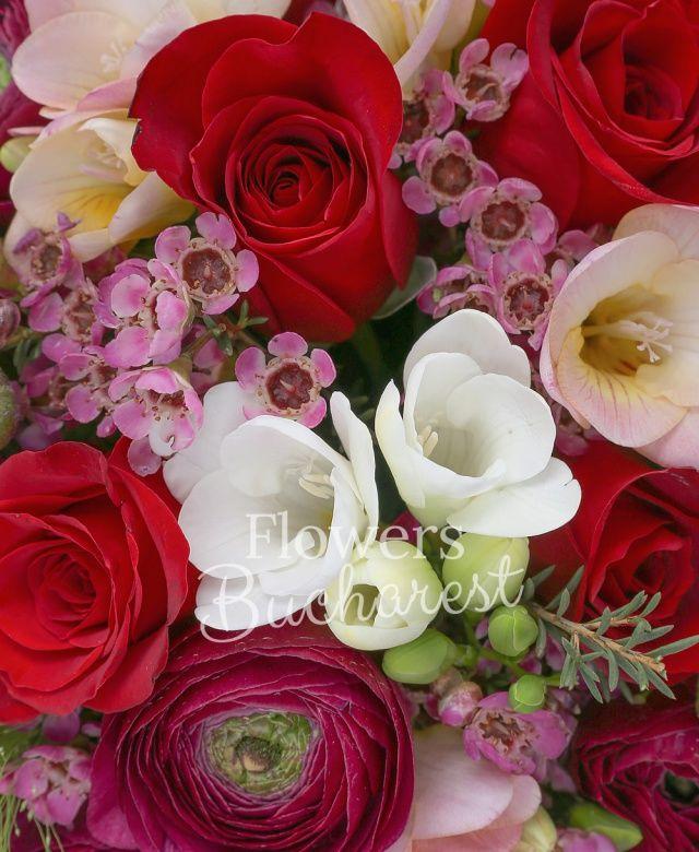 9 trandafiri rosii, 10 ranunculus grena, 10 frezii albe, 5 waxflower, panicum, eucalypt