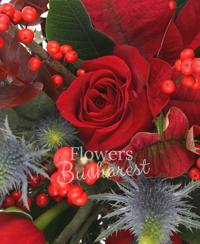 3 trandafiri rosii, 1 poinsettia roșie, 3 eryngium, 3 gerbera albe, ilex, brad, eucalypt, cutie