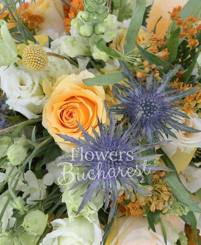 7 trandafiri crem, 5 trandafiri peach avalanche, 3 eryngium, 5 gura leului, 5 lisianthus alb, 10 craspedia, 5 asclepias, 5 cymbidium galben
