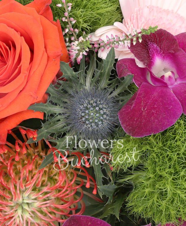 1 trandafir portocaliu, proteea, 1 eryngium, 1 orhidee dendrobium, 1 gerbera roz, 2 garoafe verzi, eucalypt, salal, cutie