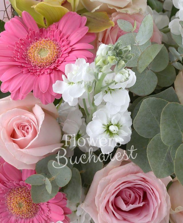 5 trandafiri roz, 7 matthiola alba, 4 gerbera roz, cymbidium verde, eucalypt, salal, cuib