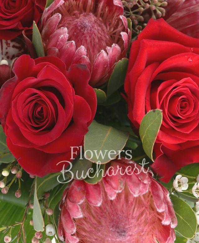 5 trandafiri rosii, 3 proteea rosii, 3 veronica roz, 2 waxflower alb, 3 aspidistra, cymbidium grena, eucalypt, vas ceramic