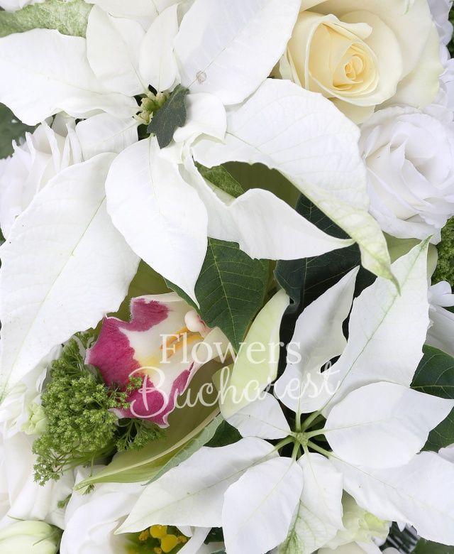 10 trandafiri albi, 10 lisianthus alb, 10 trachelium verde, 1 cymbidium verde mare, 7 crizanteme, 10 poinsettia, brad argintiu, ferigă, colac mare