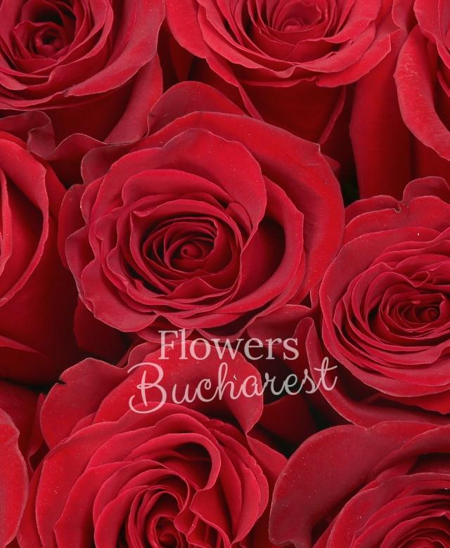 15 trandafiri, cutie neagra cu toarte