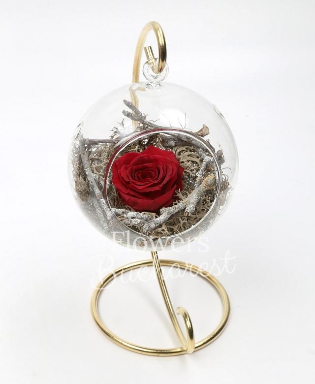 1 trandafir_criogenat_rosu, glob sticla