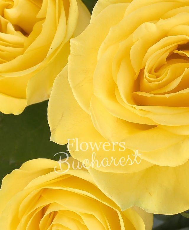 17 trandafiri galbeni, eucalypt, salal, cuib