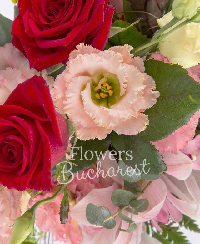 3 trandafiri rosii, 2 proteea, 3 lisianthus roz, 2 solidago, cymbidium roz, 2 bupleurum, eucalypt, cuib
