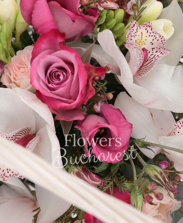 5 trandafiri mov, 3 gerbera roz, 10 frezii albe, 3 lisianthus roz, crizantemă alba, 3 miniroze roz, 3 santini roz, 5 garoafe albe, cymbidium alb, waxflower roz, eucalypt, coș